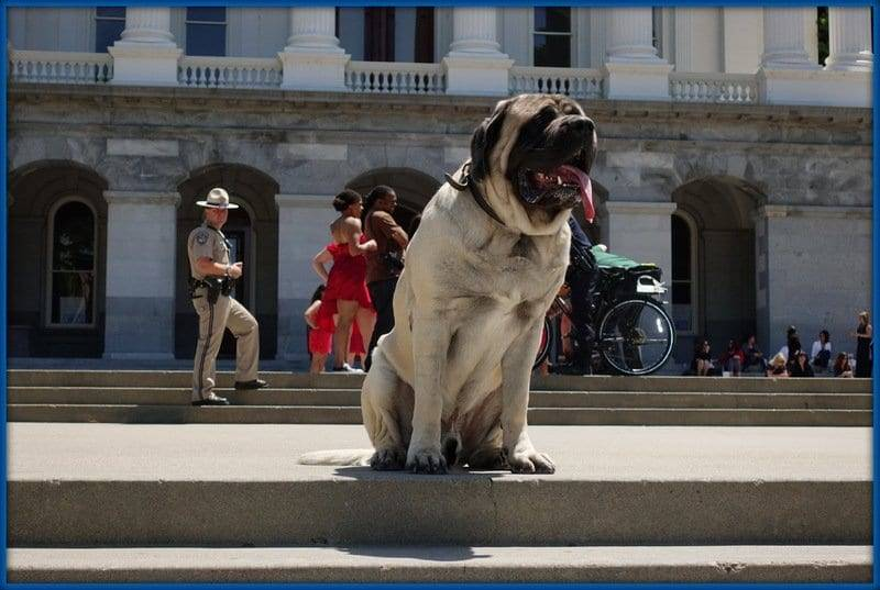 Dog Training at the California State Capitol in Sacramento