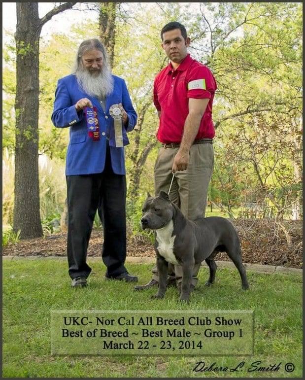 american service dog training