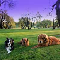 Dog Boot Camp Sacramento