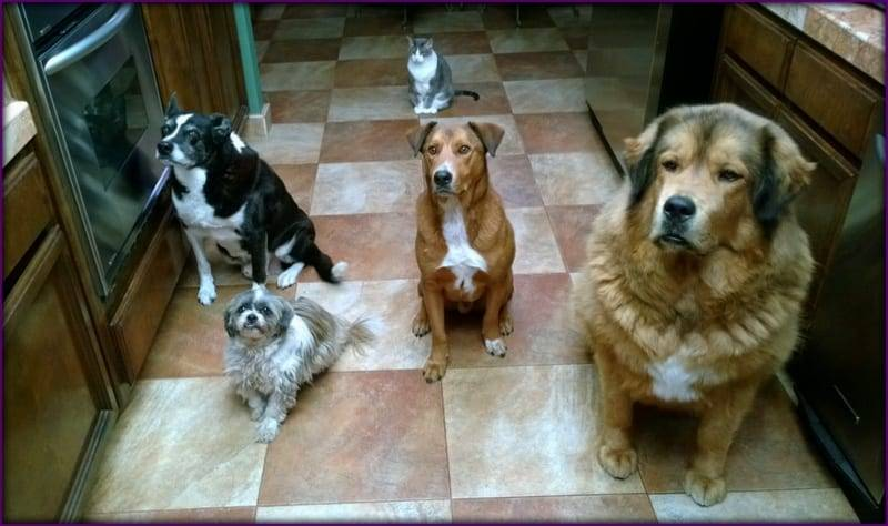 Trained dogs in Sacramento,California Area trained in a kitchen situation.