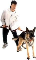 dog training sacramento
