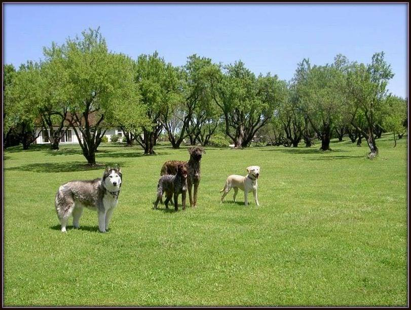 Five dogs off-leash training