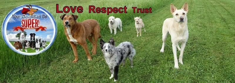 David Baron, America's #1 Dog Trainer