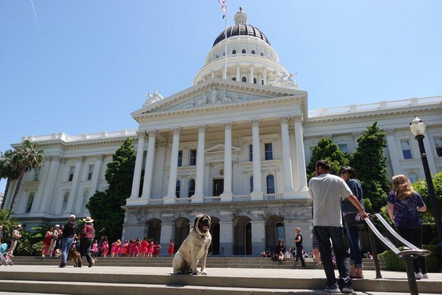 Emotional Support Dog Training State Capitol Sacramento