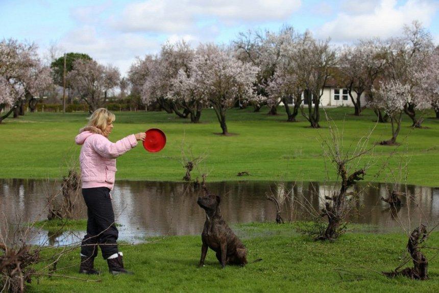 sacramento Assistance Dog Trainers.