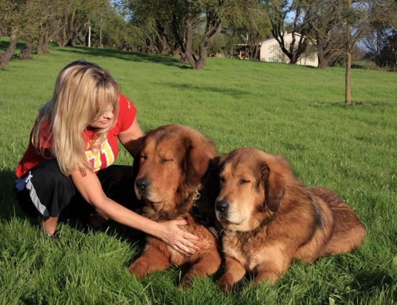 service dogs in sacramento