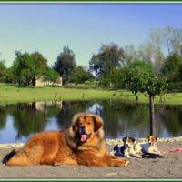 DOG TRAINING MARIN CA
