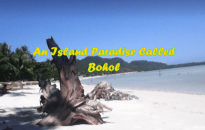 How to go to the Island of Bohol???