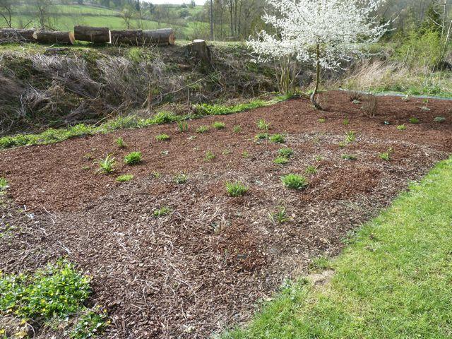 Perennials Rule (5/6)