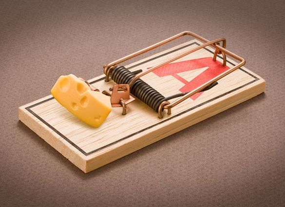The Best Mouse Traps