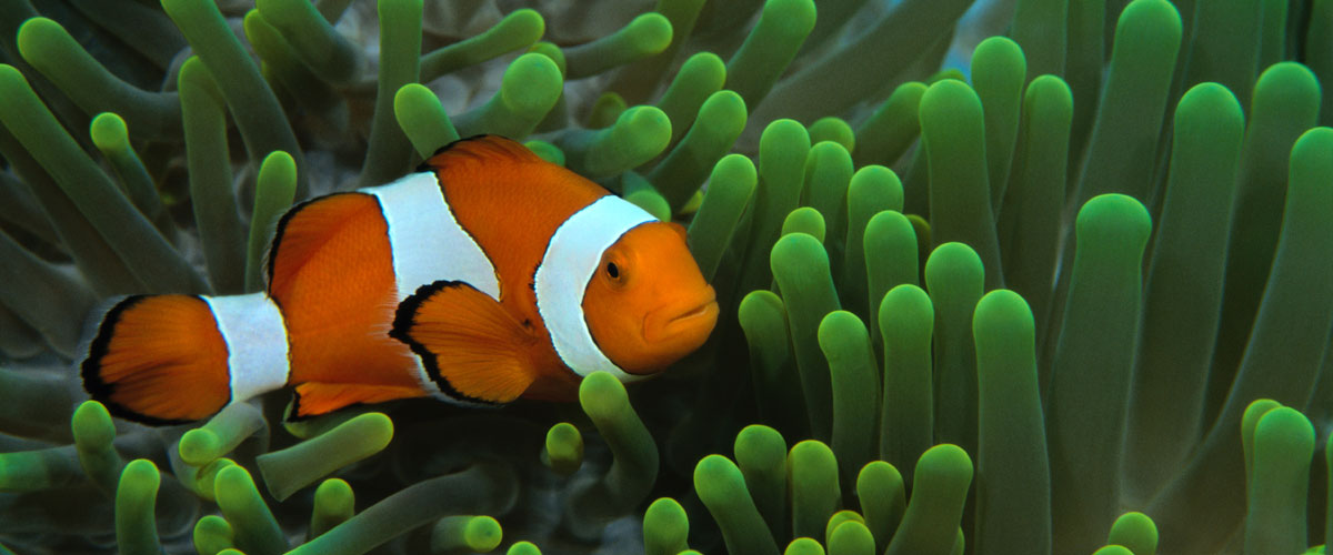 Sea Creature Super Grow Eggs