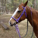 Bridles Colourful Pvc With Matching Reins Super Horse Saddlery