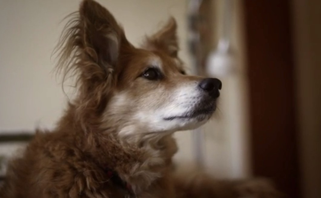 This-Dog-Can-Smell-Cancer-VIDEO