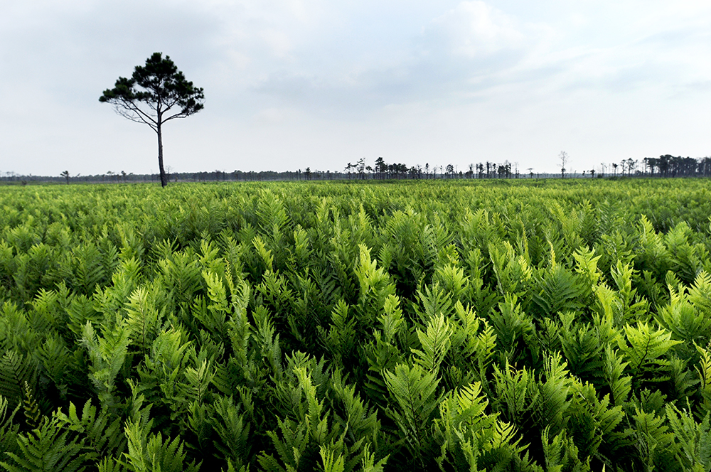 (John D. Simmons/Charlotte Observer/MCT via Getty Images)