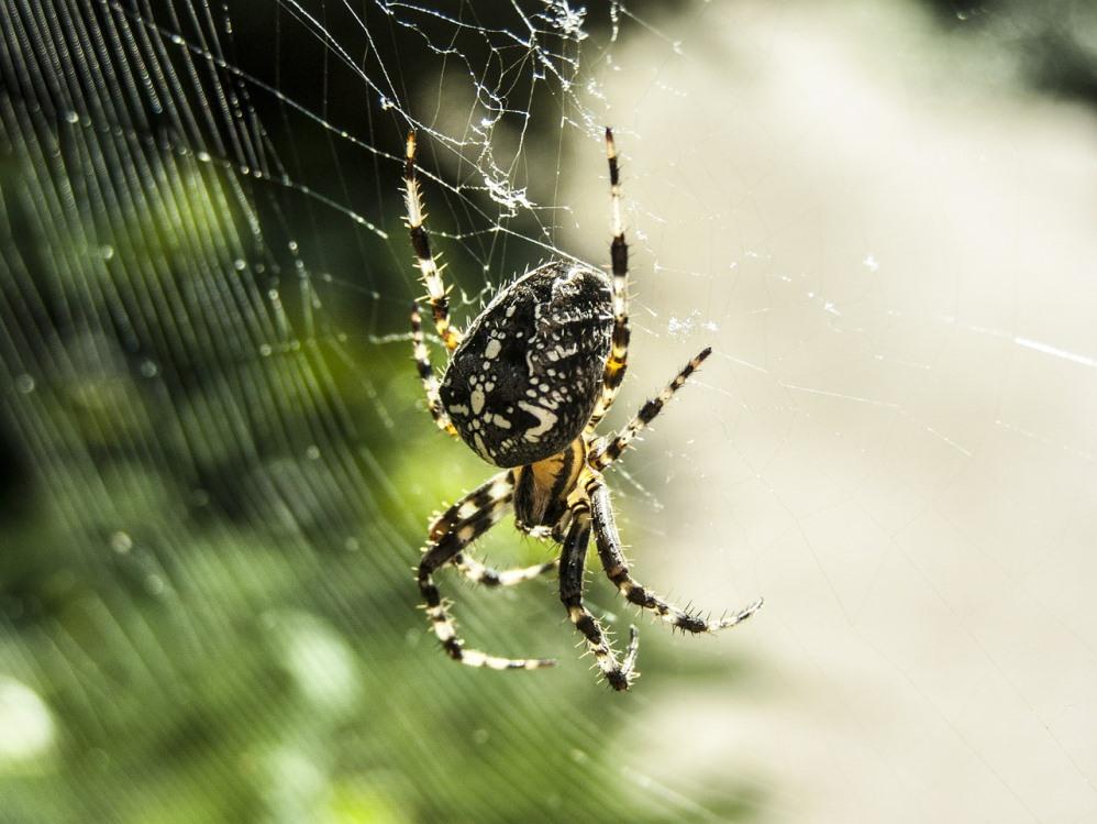spider-453939_1280
