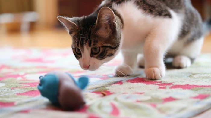 nobowl-cat-feeding-system-3