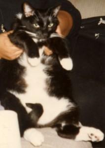 Jake E. Jake, Tuxedo Cat