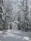 Trees laden with snow hang over the Lester-Amity trails