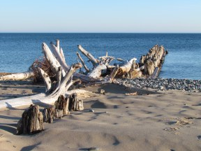 Wonderful driftwood!