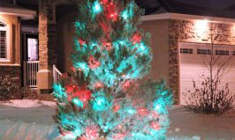 cropped-SHL-white-city-green-white-and-red-tree.jpg