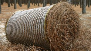 round roll pinestraw