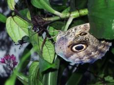 Schmetterling im Vogelpark