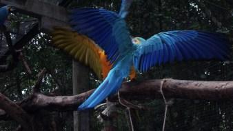 Aras im Vogelpark