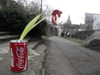Verdorrte Blume in Cola-Dose - Kunstprojekt – Anfang eines Hobbies (Teil 1/Fotoserie)