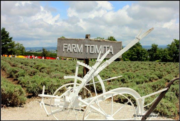 Farm Tomita Lavender Furano