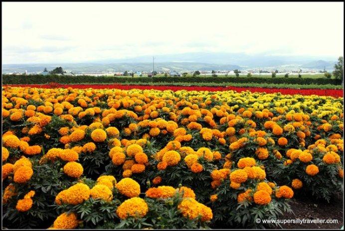 Flower bed Farm Tomita