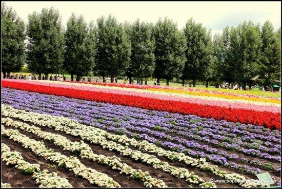 Farm Tomita Flower Bed