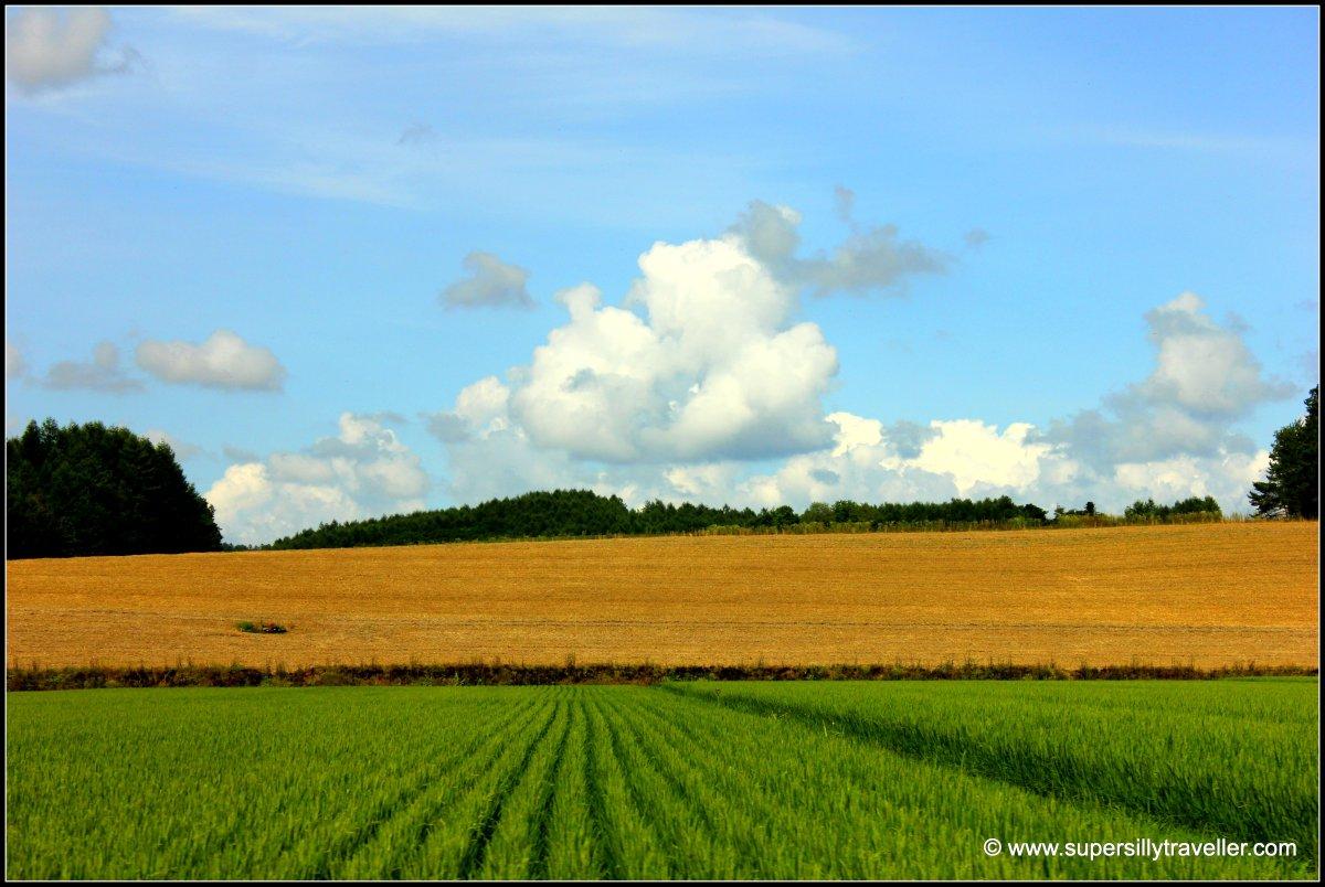 Landscape Biei Hokkaido