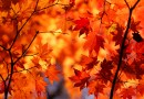 Autumn Hokkaido travelling guide – Japan