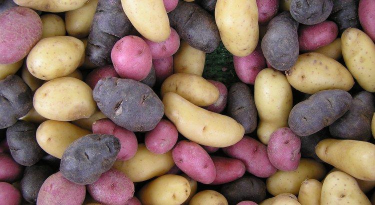 Hokkaido Potatoes