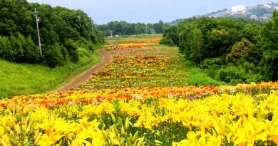 Lily garden- Onze Harukayama Yurien Otaru Day Trip