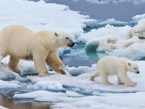 Image result for растаял ледовитый океан