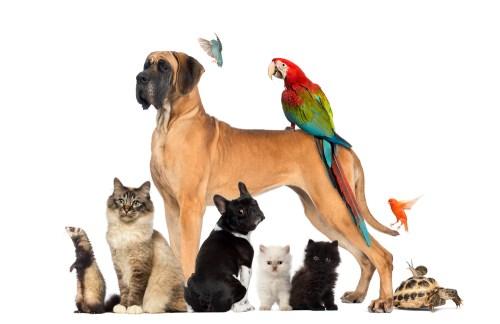 Pets. Immune system function. How to boost immune system. Coronavirus.