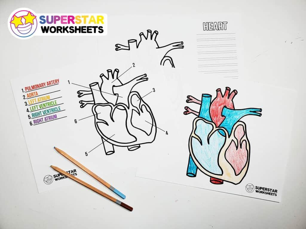 Heart Worksheets