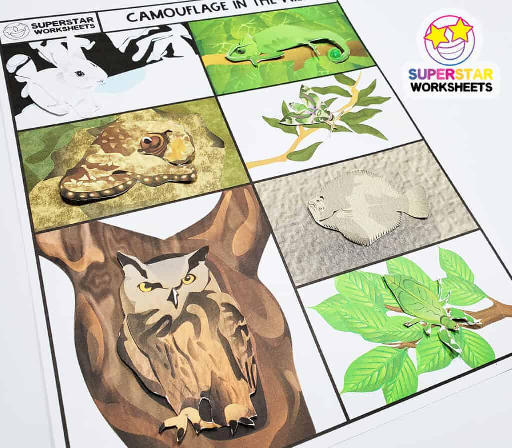 Animal Camouflage Worksheets