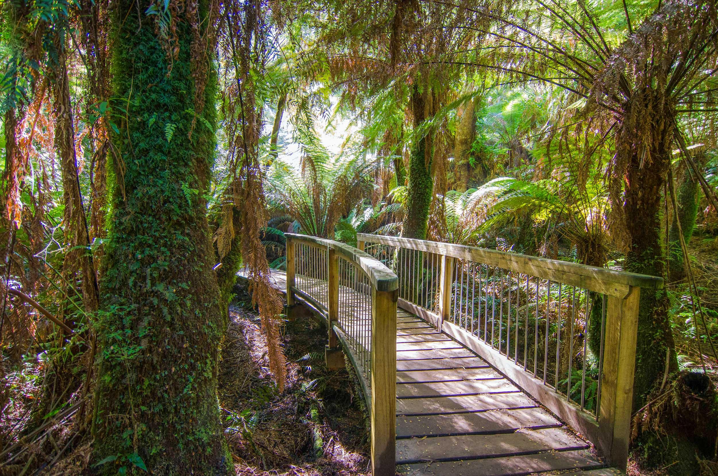 maits rest rainforest great ocean road