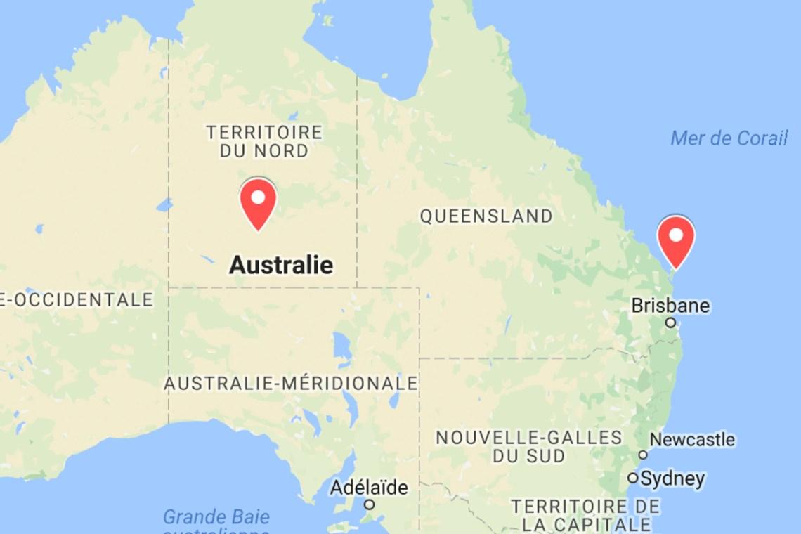 animaux d'australie où voir dingos