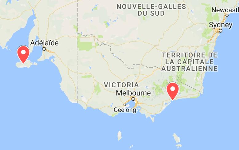 animaux d'australie où voir échidnés