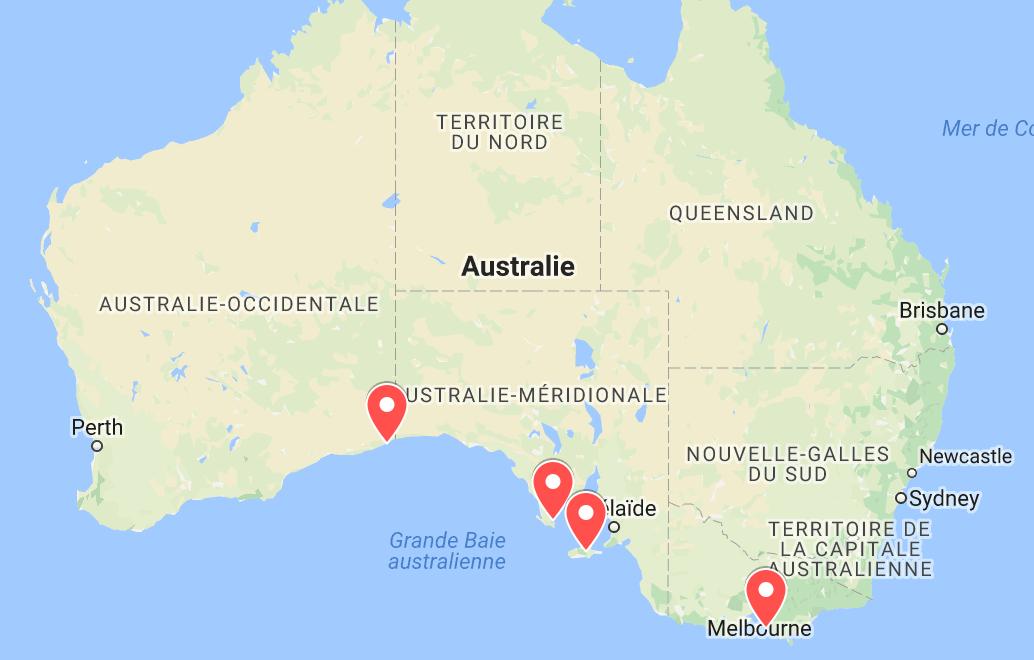 animaux d'australie où voir des lions de mer