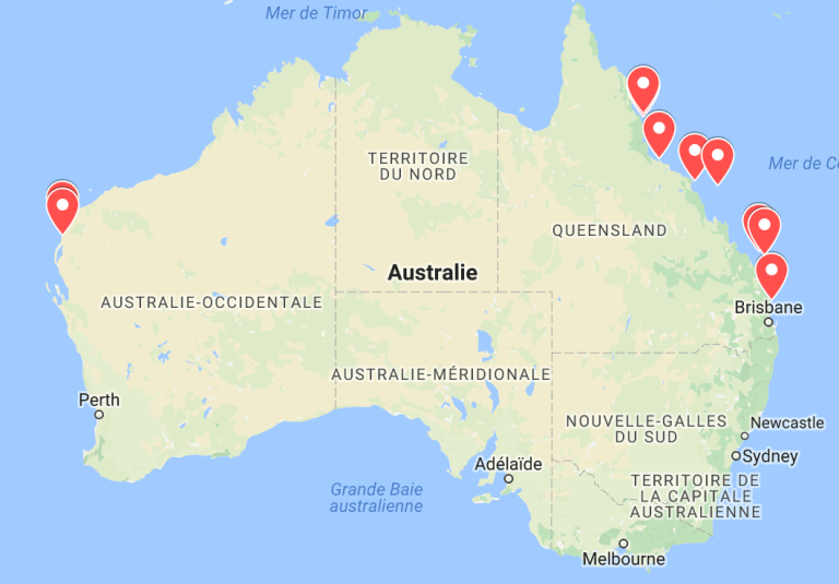 animaux d'australie où faire du snorkeling