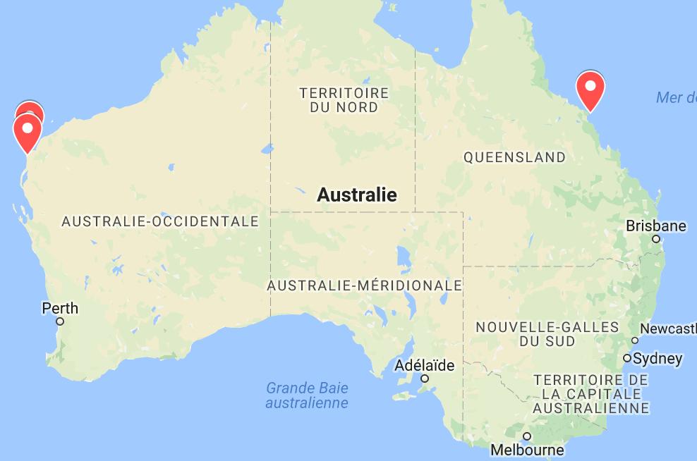 animaux d'australie où voir des tortues