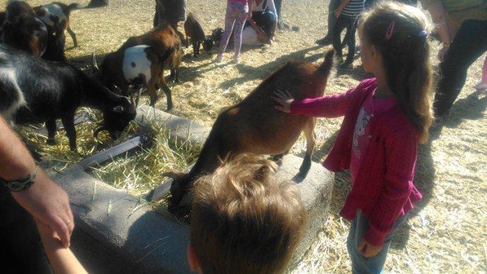 Mimando a las cabritas en la Granja El Álamo