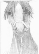 My drawing of the race horse Tessa Rosso