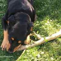Wordless Wednesday Dixie with a Stick