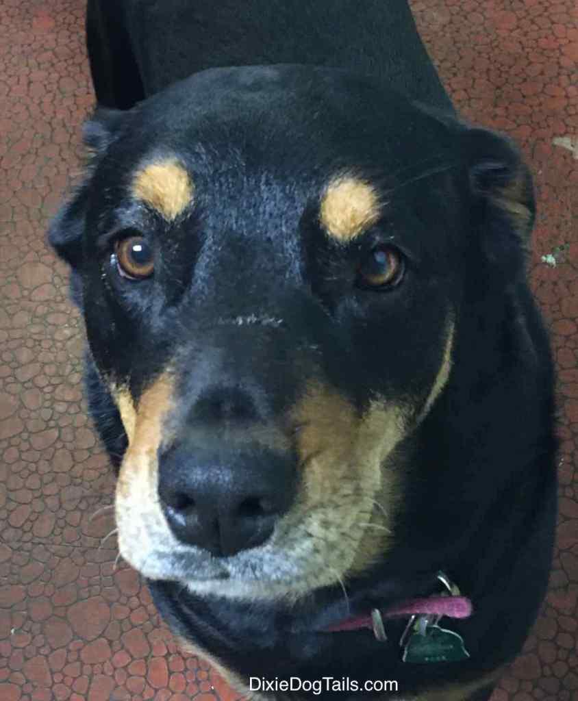 Closeup of dogs face