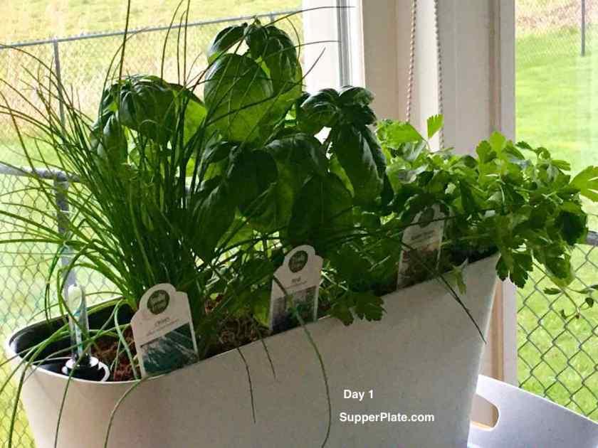 Aquaphoric Herb Garden Review